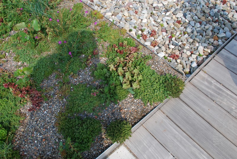 Green Roofs. GREEN ROOFS